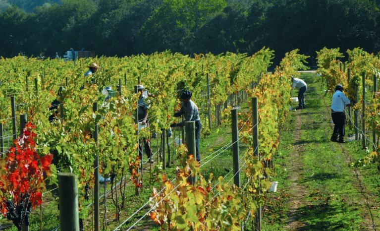 Matetic Vineyards