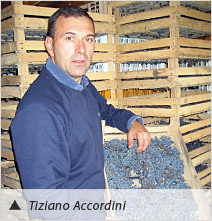 Tiziano Accordini